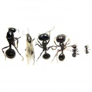 Колония муравьев без Матки
