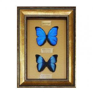 """Бабочки """"Две морфиды"""" (на золотом фоне)"""
