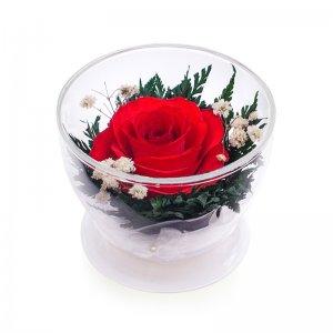 Композиция из красной розы (CuSr1)