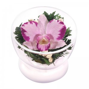 Композиция из орхидеи (CuSO3)