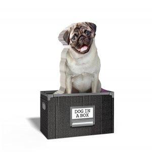 Бумага для заметок Dog in a box (150 листов)