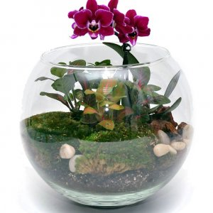 Флорариум Орхидея фиолетовая